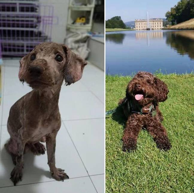 Bernard was rescued and rehomed with a new owner in the UK. Credit: Harbin SHS