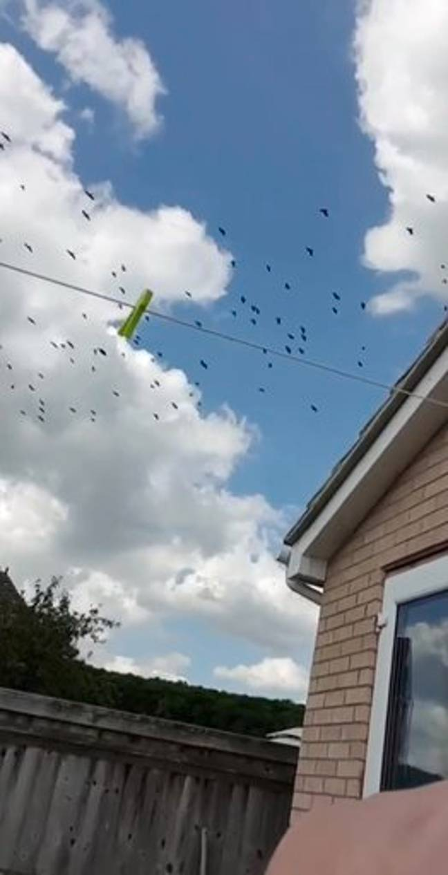 The crows swarmed the house. Credit: Kennedy News and Media