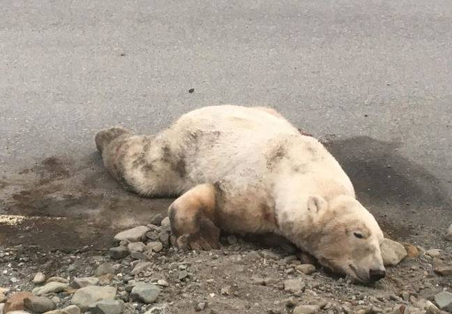 The bear was shot and found dead near the local airport. Credit: Reddit/Jalsavrah