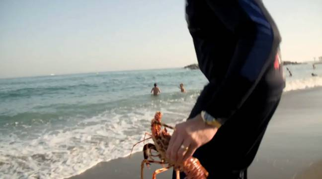 The boxer set the lobsters free in the nearby ocean. Credit: ITV