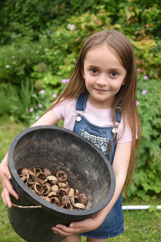 Beau collecting walnuts from the garden. Credit: Splash News