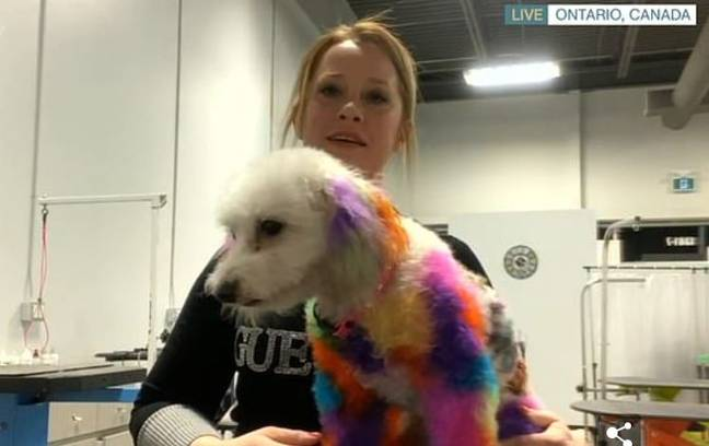 Nicole has been criticised for dyeing her dog's hair. Credit: ITV