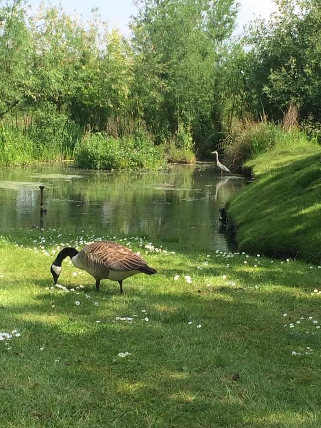 The animals enjoy the garden. Credit: Facebook/The Secret Valley Walkden