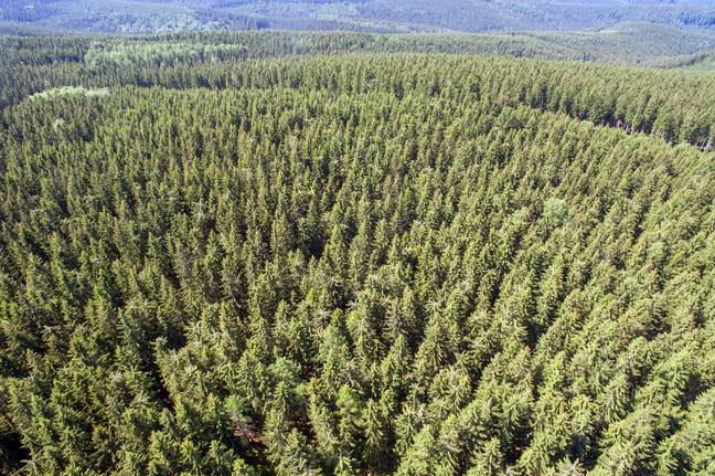 Researchers used mapping technology to discover areas where trees could be planted. Credit: PA