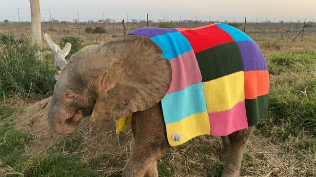 Khanyisa sporting her new coat. Credit: Caters