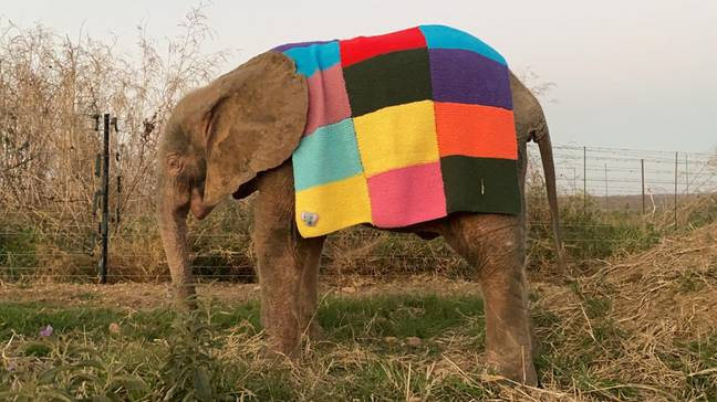 The Elmer blanket. Credit: Caters