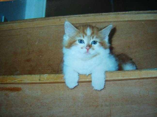 Rubble when he was a kitten. Credit: SWNS