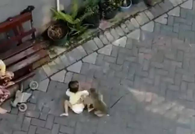 A monkey was caught trying to kidnap a child. Credit: Twitter