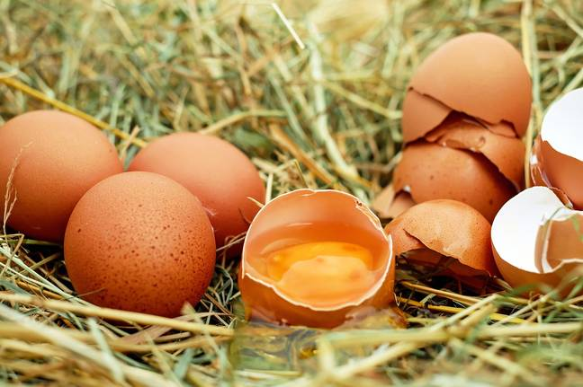 The free range egg farm was closing down, so needed to remove all the hens urgently. Credit: Pixabay