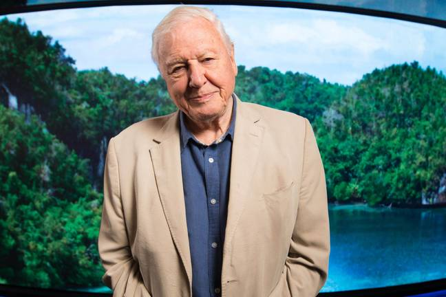 David Attenborough turns 95 this year and he still doesn't have a driving licence ' Credit: PA