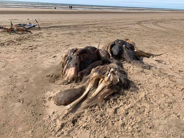 Clearly, it's a whale donkey dinosaur. Credit: Facebook/Ainsdale Community Group