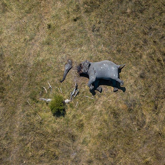 The startling photograph shows the devastation caused by poaching. Credit: Magnus News/Justin Sullivan