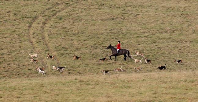 Hunting in the UK