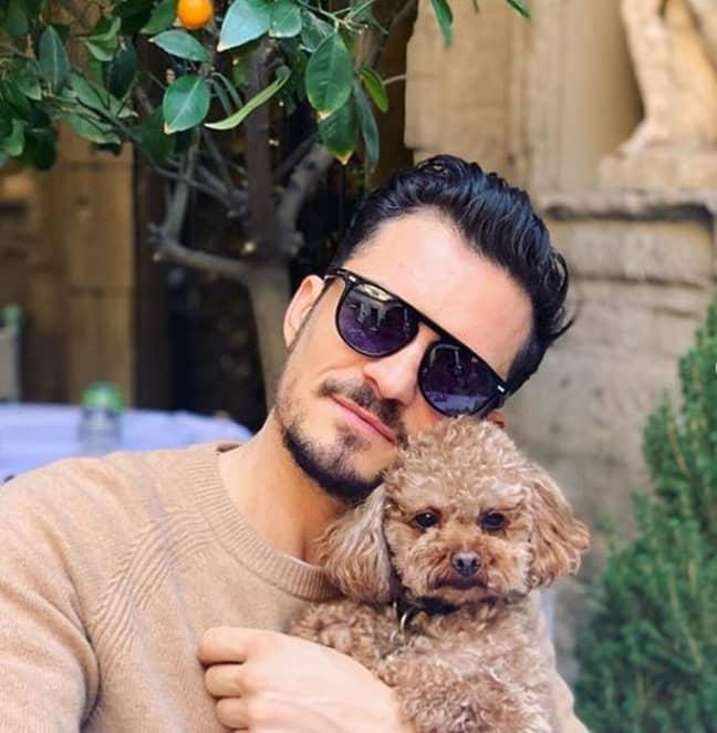 The actor says he is heartbroken after his pet pooch went missing. Credit: Instagram