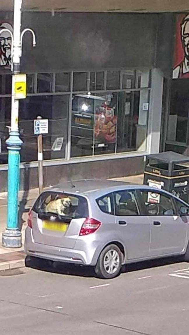 The dog was left trapped in the back of the car. Credit: Facebook