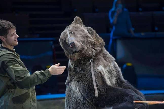 Yasha the bear. Credit: East2West News