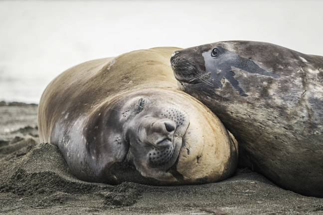 Some elephant seal scientists, enjoying a bit of downtime. Credit: PA