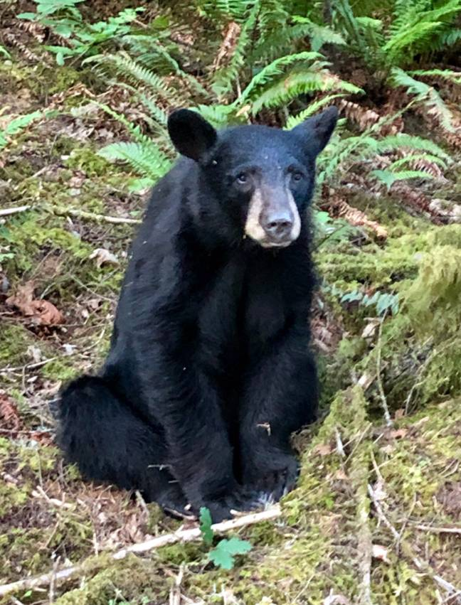 The male bear was shot after becoming too accustomed to taking selfies with tourists. Credit: Washington County Sheriff's Department