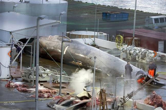 Credit: Sea Shepherd Global