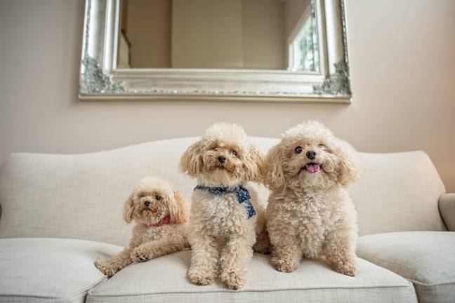 The woman paid thousands to have her dog cloned but says it was worth every penny. Credit: SWNS