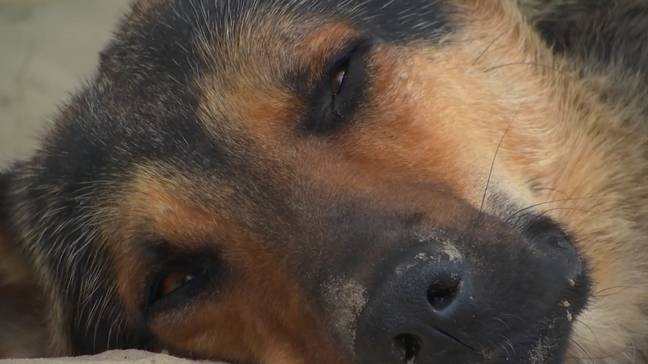 Keep an eye on your pets during extreme heat waves. Credit: Associated Press