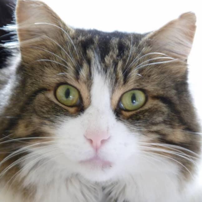 Frankie the cat. Credit: Rachel Fitzsimons