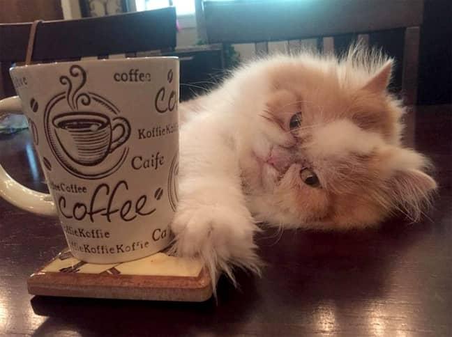 Louis the cat. Credit: Caters/@louisandmonae