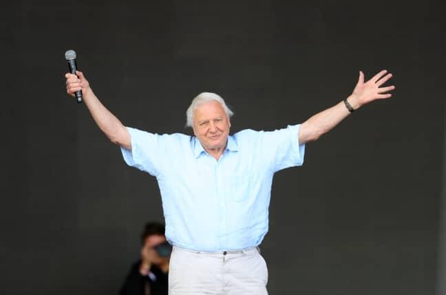 Sir David Attenborough making a surprise appearance at this year's Glastonbury. Credit: PA