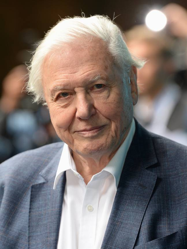 Sir David Attenborough's latest documentary has left many vowing to change their behaviour. Credit: PA