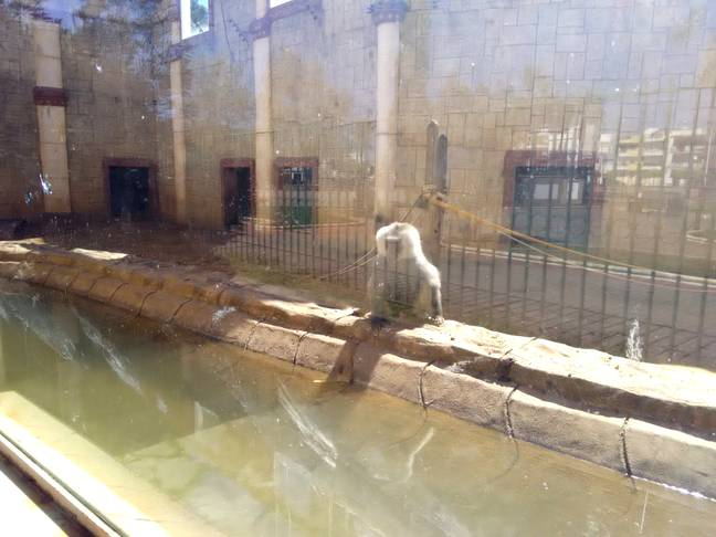 The zoo reportedly closed following a number of deaths and complaints from activists. Credit: Pen News