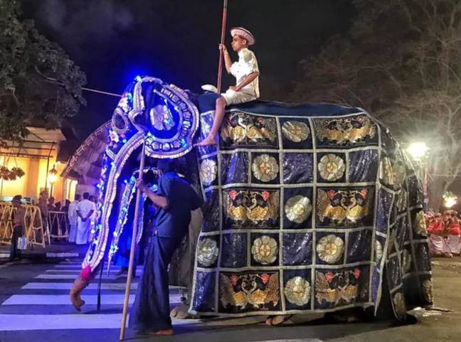 he elephants are dressed up and paraded down the streets during the festival. Credit: Save Elephant Foundation/Lek Chailert