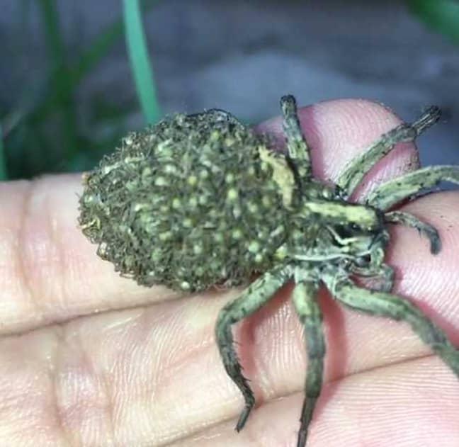 Credit: wannabe_entomologist via Storyful