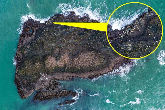 The drone captured the seals from above. Credit: StoryTrender