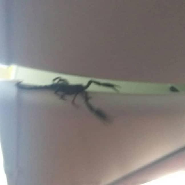 A live scorpion was filmed on a plane. Credit: ViralPress