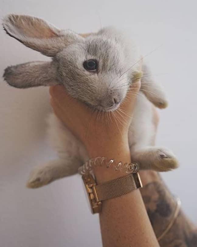 Neytiri one of the rabbits. Credit: Instagram/mythical.mia