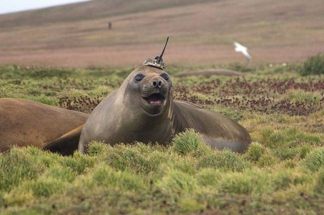 This seal seems fairly happy about it. Credit: Sorbonne University
