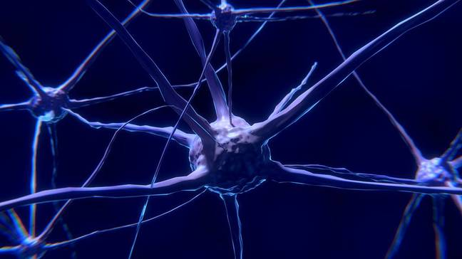 Nerve cells are monitored to identify patterns in the brain. Credit: Pexels