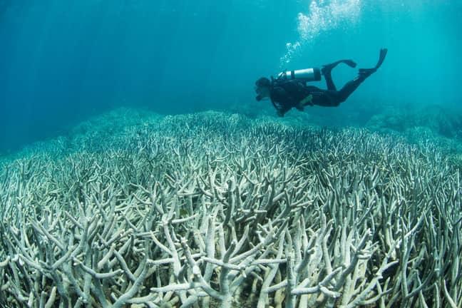 Credit: The Ocean Agency