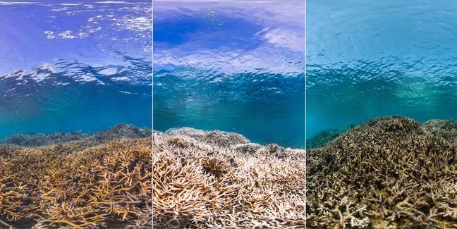 Before And After Of The Great Barrier Reef Coral Bank Credit: The Ocean Agency / XL Catlin Seaview Survey