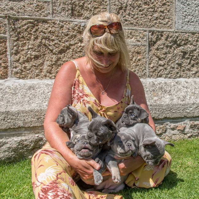 French bulldog breeder Caroline Brixton with the latest litter. Credit: SWNS