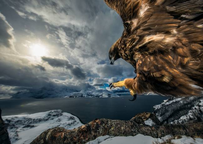 Audun has every right to feel aggrieved that he didn't win. Credit: Audun Rikardsen/Wildlife Photographer of the Year