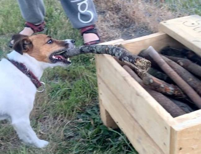 The stick library has proved popular with dogs and owners in the area. Credit: Caters
