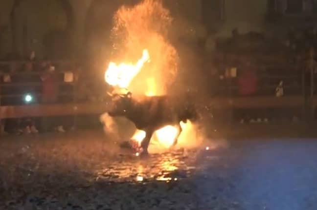 Toro De Fuego sees bulls set on fire. Credit: AnimaNaturalis