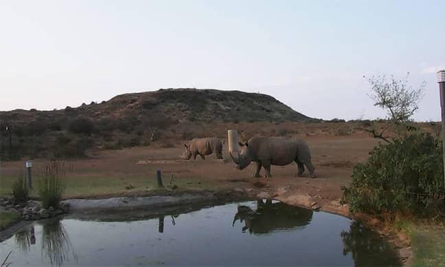 Credit:Endangered Wildlife Trust/LJMU