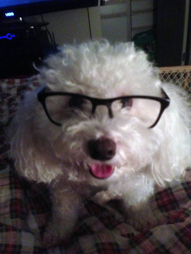 Marino the dog. Credit: Facebook