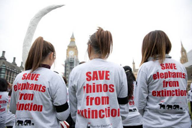 Hundreds of activists from Action for Elephants UK stage a silent protest at Parliament Square, London, to raise awareness of the poaching crisis. Credit: PA