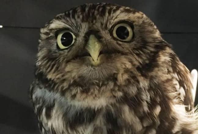 Credit: Suffolk Owl Sanctuary/Facebook