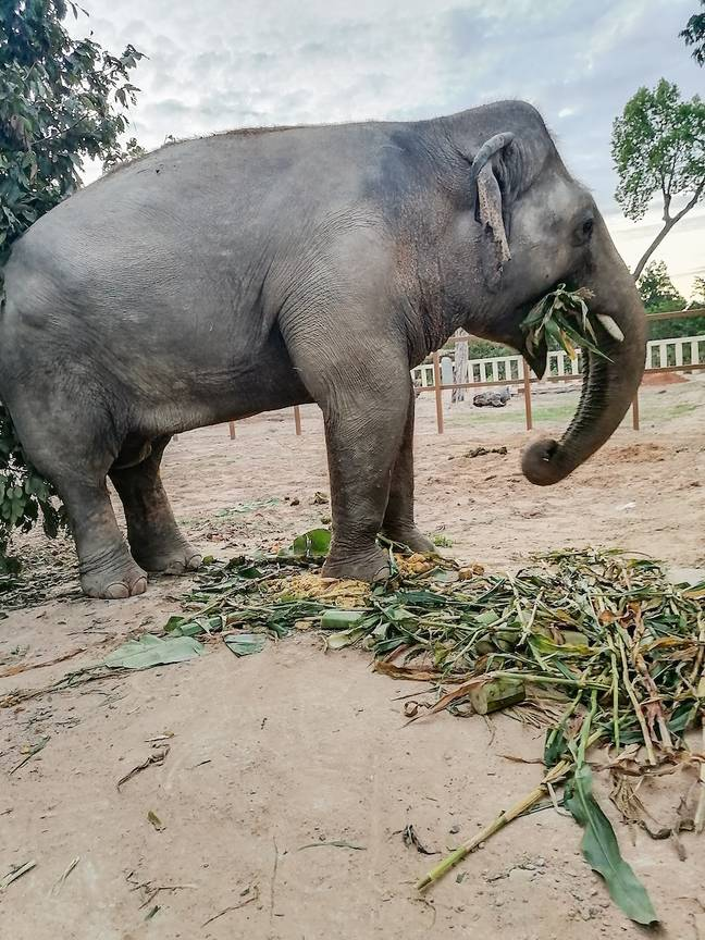 Kaavan at his new home in Cambodia. Credit: ViralPress