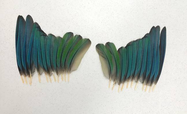 The feathers that were used. Credit: Storytrender