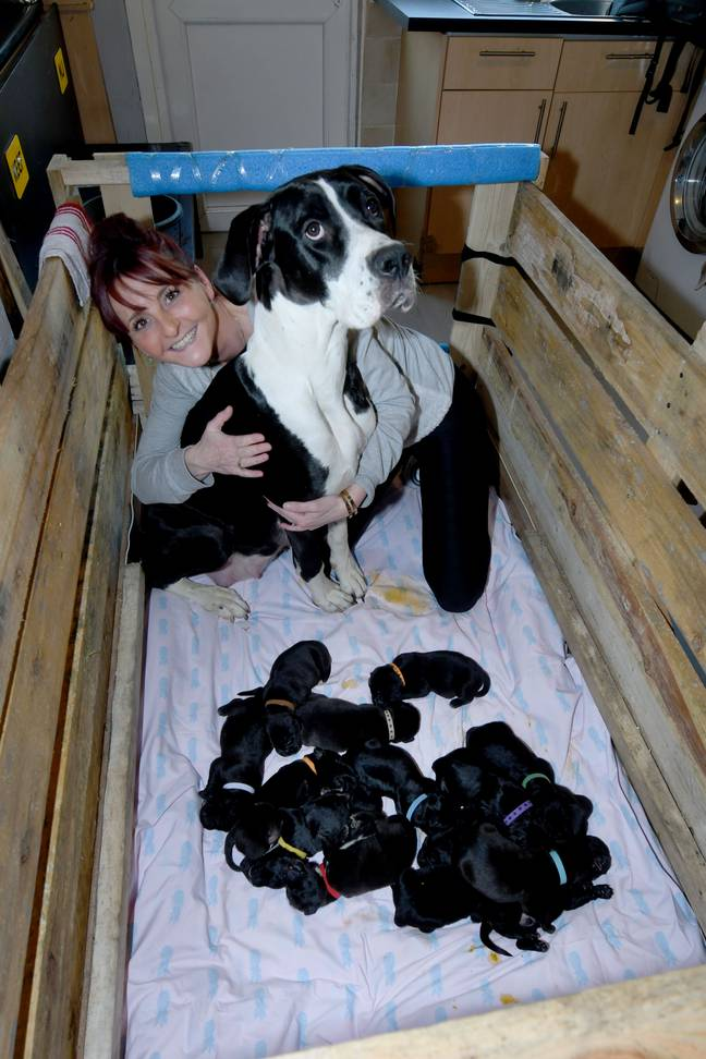 MJ and Joanne with the puppies. Credit: SWNS